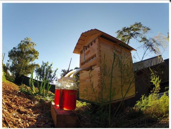 Bee Flow